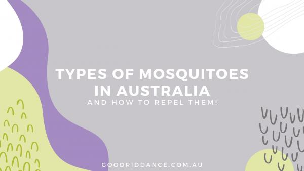 Types of mosquitoes in Australia (and how to repel them!)