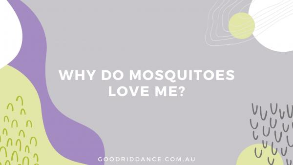 Why do mosquitoes love me? This is what the science says
